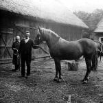 Sufczyn 1970r. Karmienie konia owsem